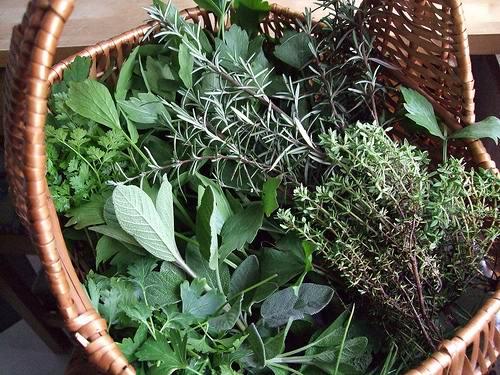 Травы для похудения (Рецепты)
